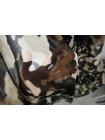 Шифон шелковый шерсть CMF-N30 30012192