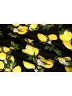 Хлопок поплин лимоны на черном BLP 19041726